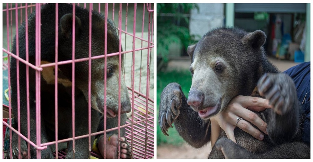 Portada Bebé oso tenido como mascota se salva al ponerlo en venta