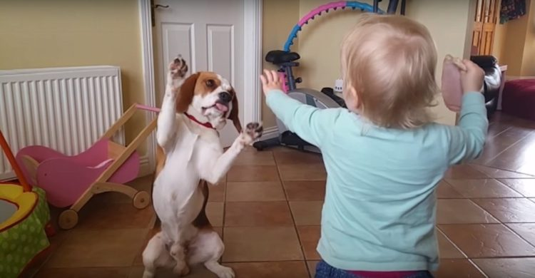 Portada Perro es parte de la familia el mejor regalo de felicidad junto a bebé