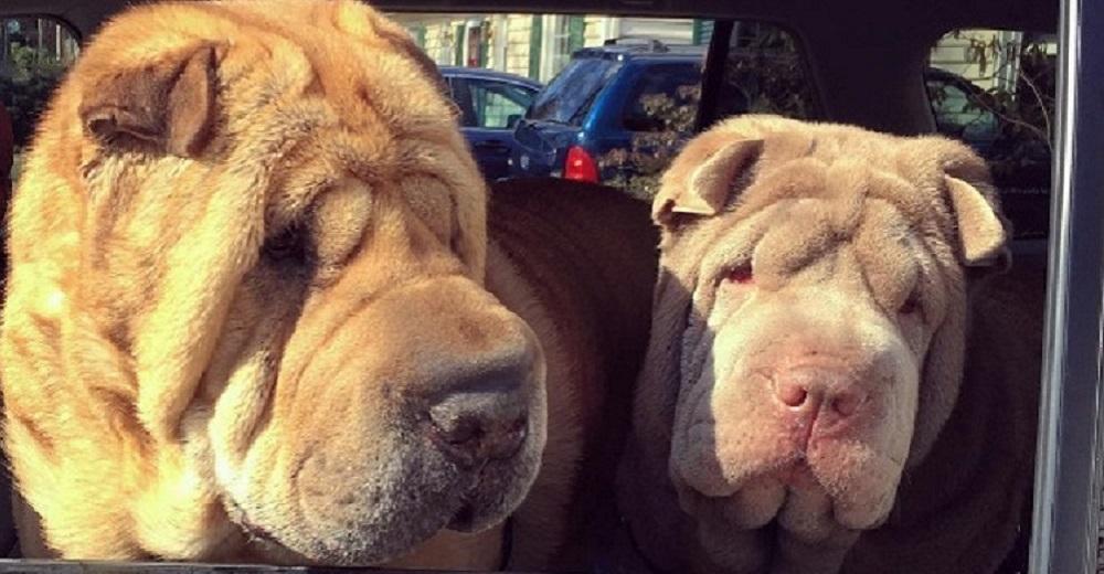 Portada dos perritos con vidas de tragedia distintas se conocen al ser adoptados