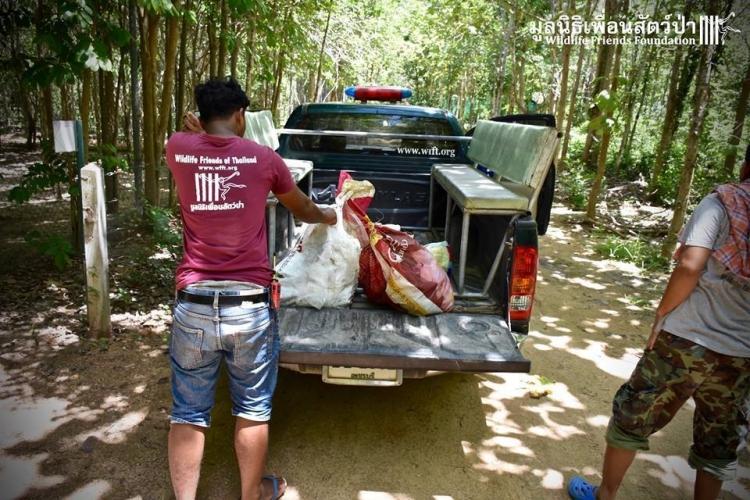Puerco-espin-bolsa-tailandia 1