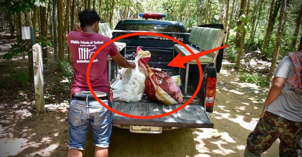 Puerco-espin-bolsa-tailandia-portada