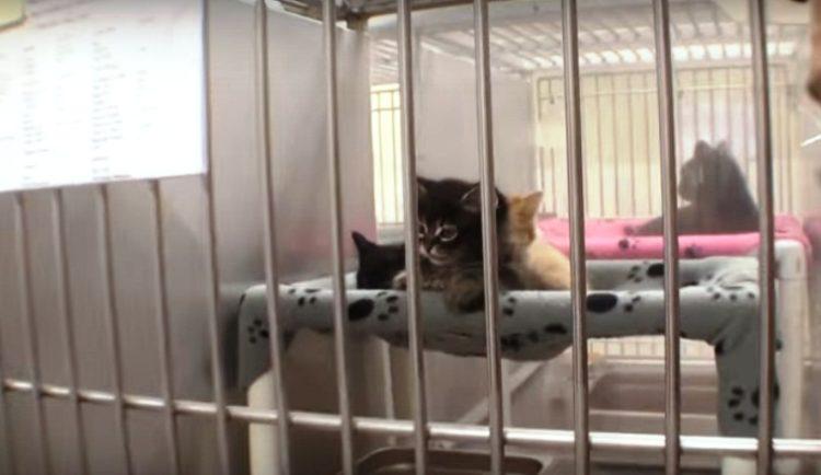 Refugio en Adopción 10