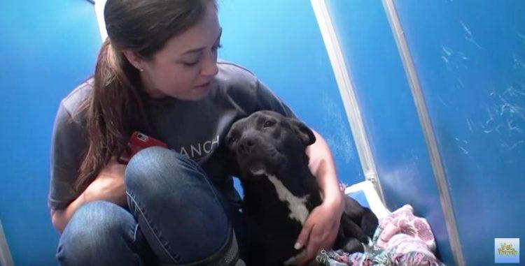 Refugio en Adopción 3