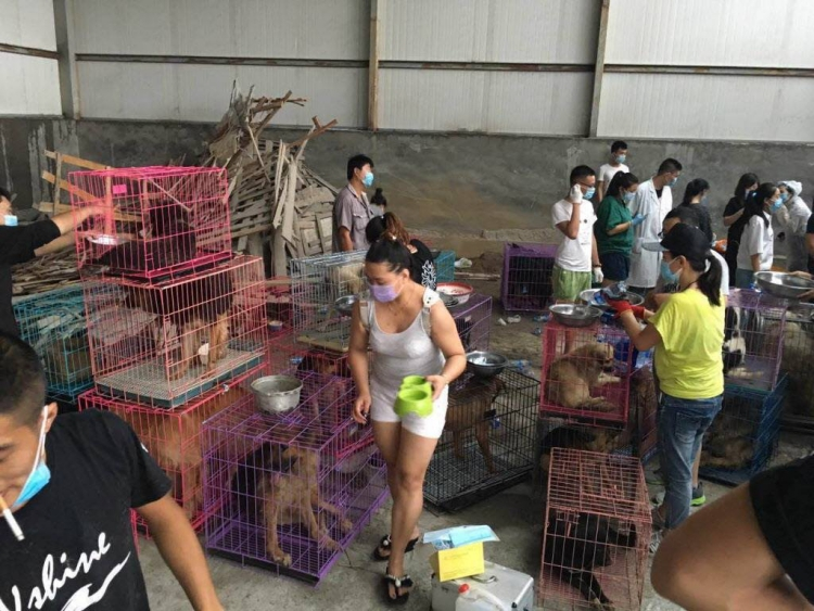 Rescate-perros-China 1