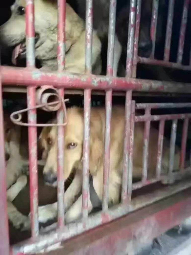 Rescate-perros-China 2