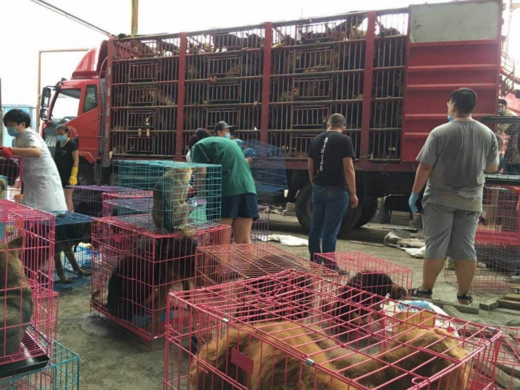 Rescate-perros-China 3
