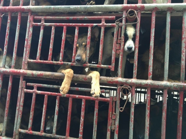 Rescate-perros-China 4