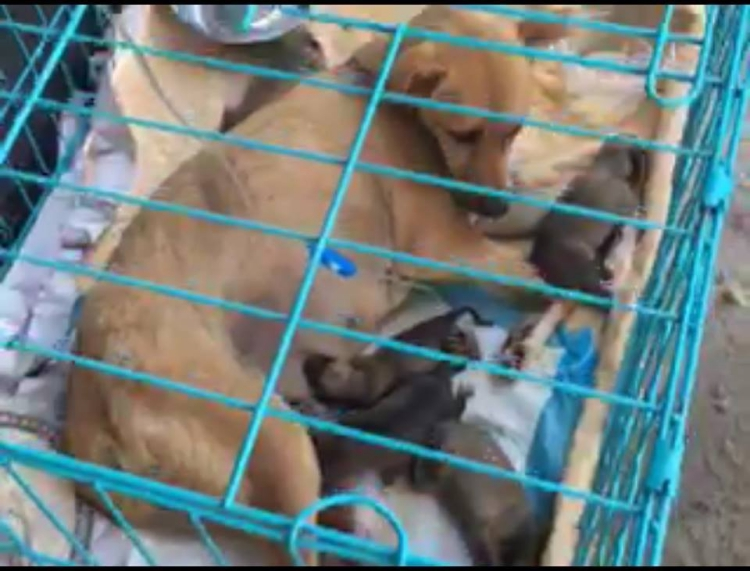 Rescate-perros-China 5