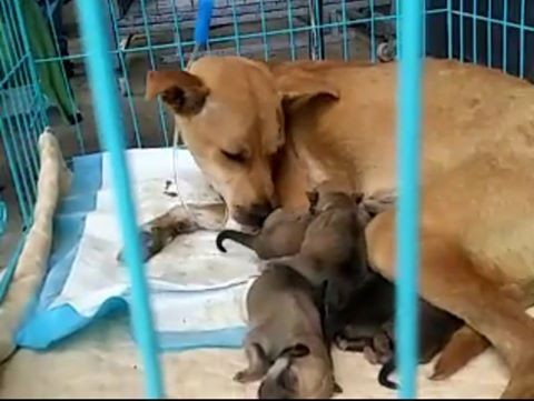 Rescate-perros-China 7