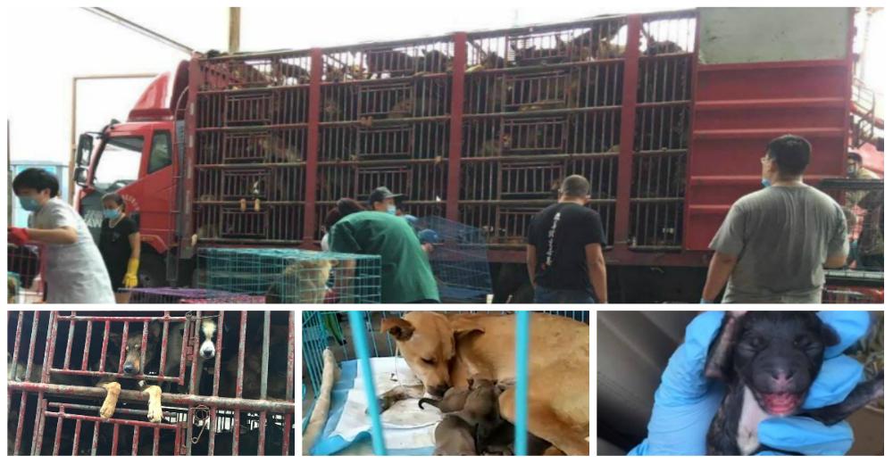 Rescate-perros-China-portada