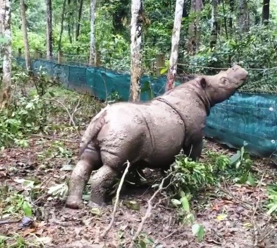 Rinoceronte dio a luz una niña 4