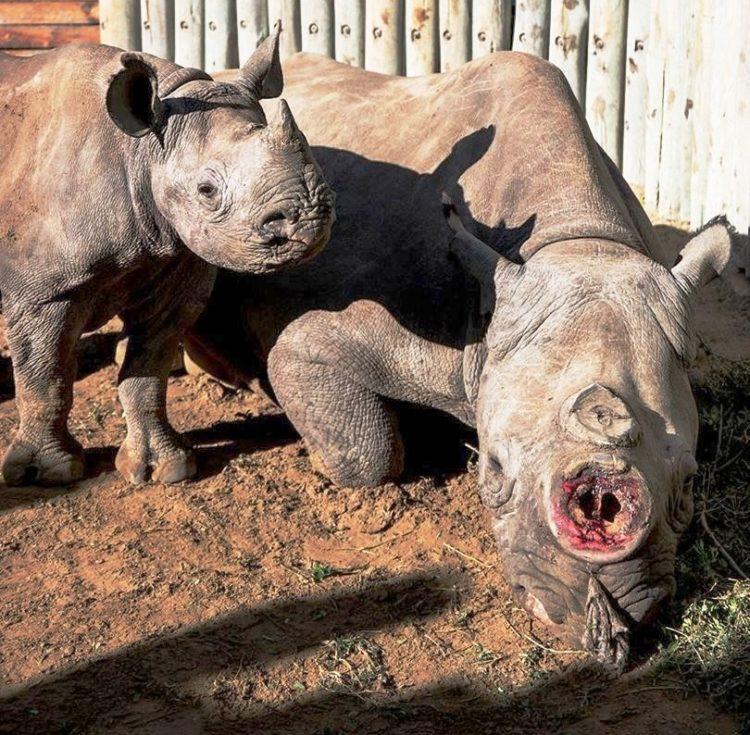 Rita Rinoceronte 1