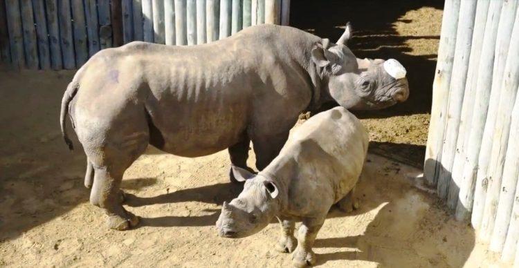 Rita Rinoceronte 10
