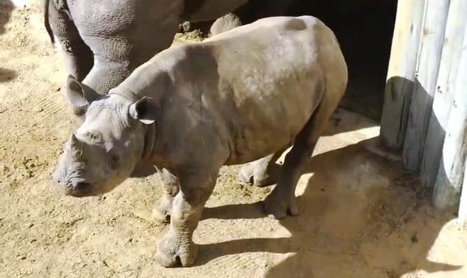 Rita Rinoceronte 11