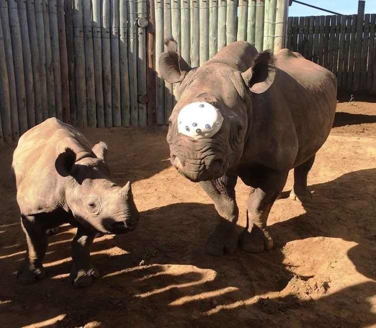 Rita Rinoceronte 3