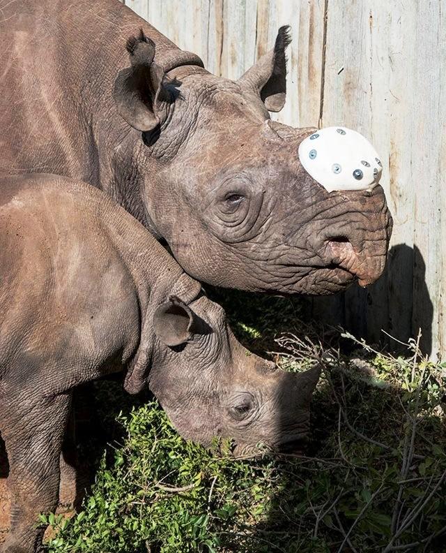 Rita Rinoceronte 4