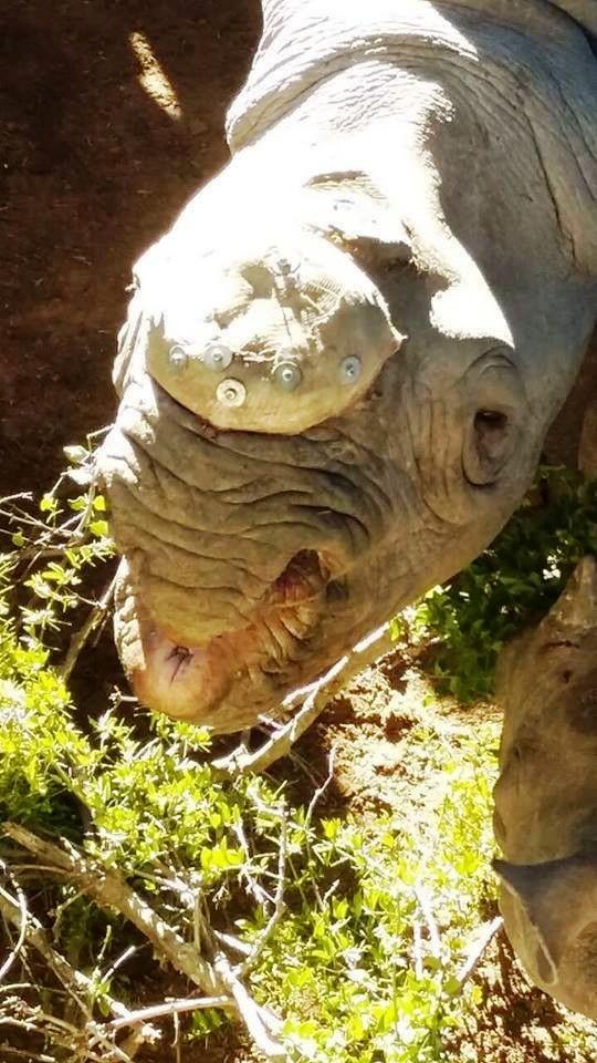 Rita Rinoceronte 6
