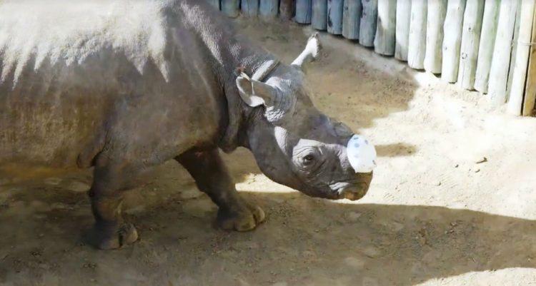 Rita Rinoceronte 8