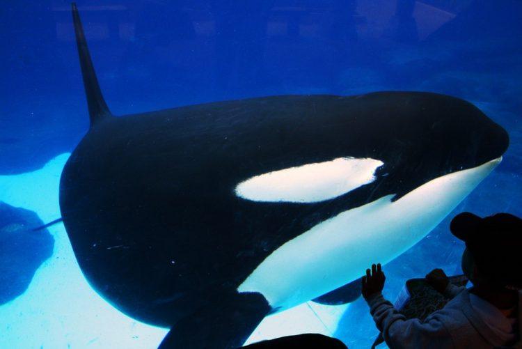 Sara Fischbeck revela detalles impactantes de los animales de SeaWord 1