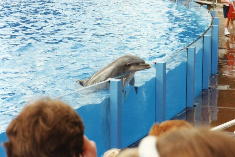 Sara Fischbeck revela detalles impactantes de los animales de SeaWord 10
