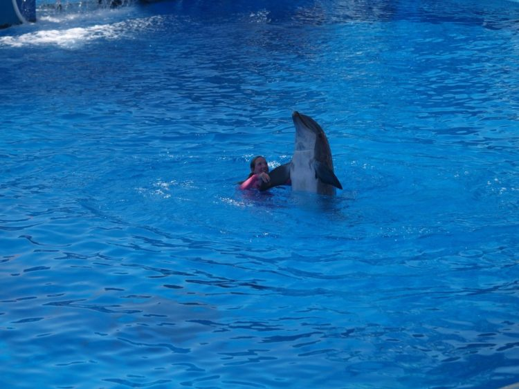 Sara Fischbeck revela detalles impactantes de los animales de SeaWord 11