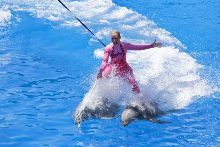 Sara Fischbeck revela detalles impactantes de los animales de SeaWord 13