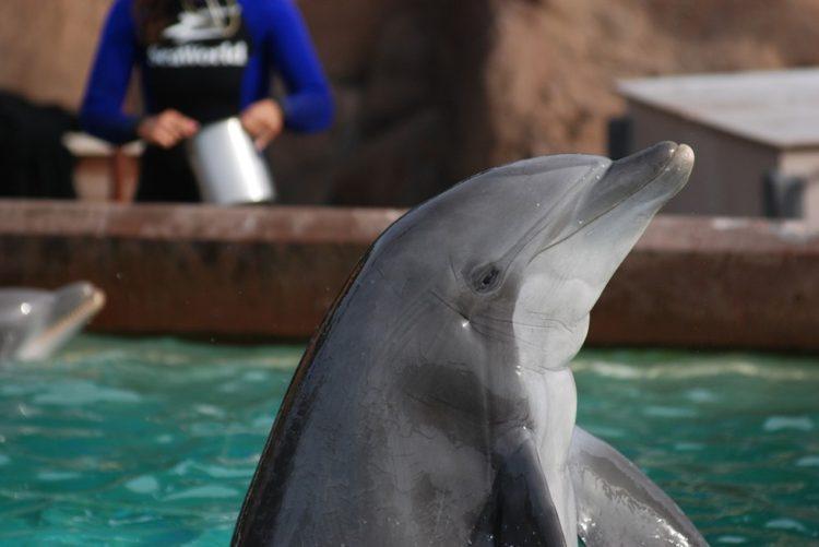 Sara Fischbeck revela detalles impactantes de los animales de SeaWord 14