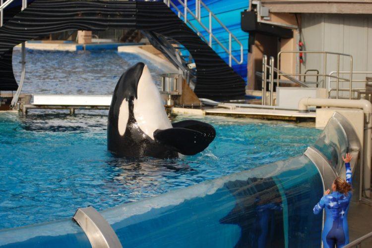 Sara Fischbeck revela detalles impactantes de los animales de SeaWord 3