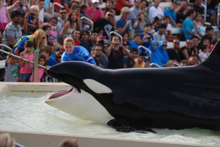 Sara Fischbeck revela detalles impactantes de los animales de SeaWord 4