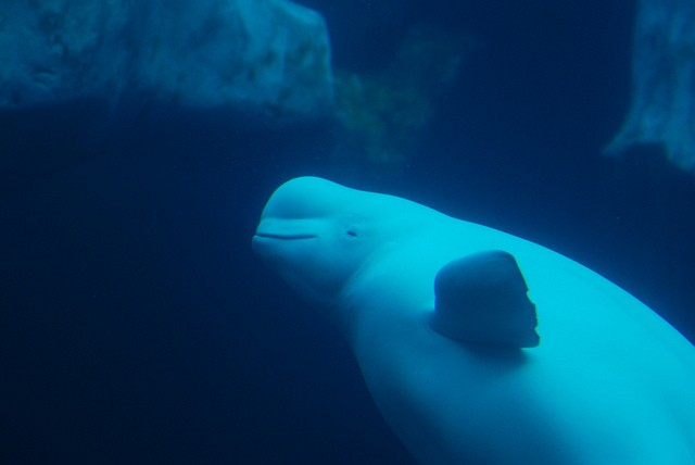 Sara Fischbeck revela detalles impactantes de los animales de SeaWord 5