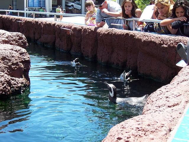 Sara Fischbeck revela detalles impactantes de los animales de SeaWord 7