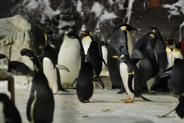 Sara Fischbeck revela detalles impactantes de los animales de SeaWord 8
