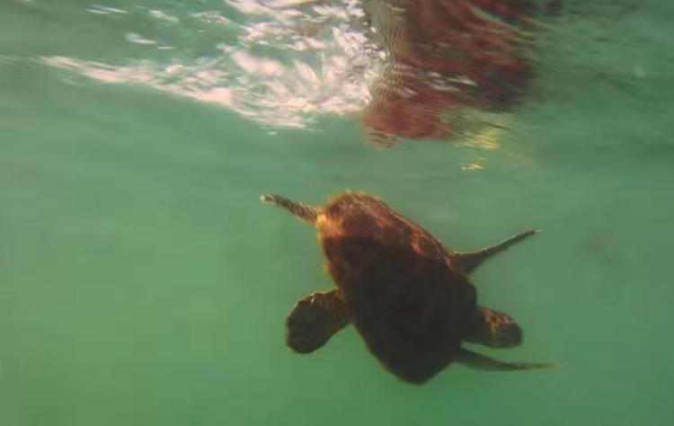 Sasha-tortuga-rescatada 4