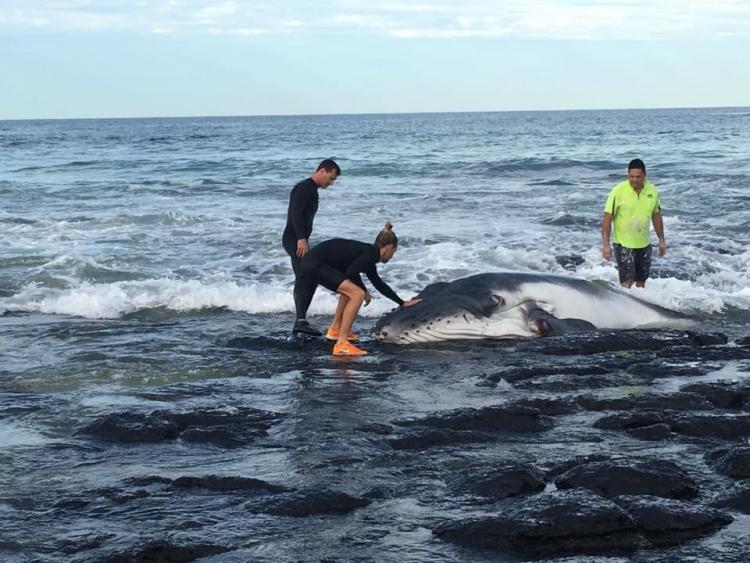 Surfers-salvaron-ballena-Australia 2