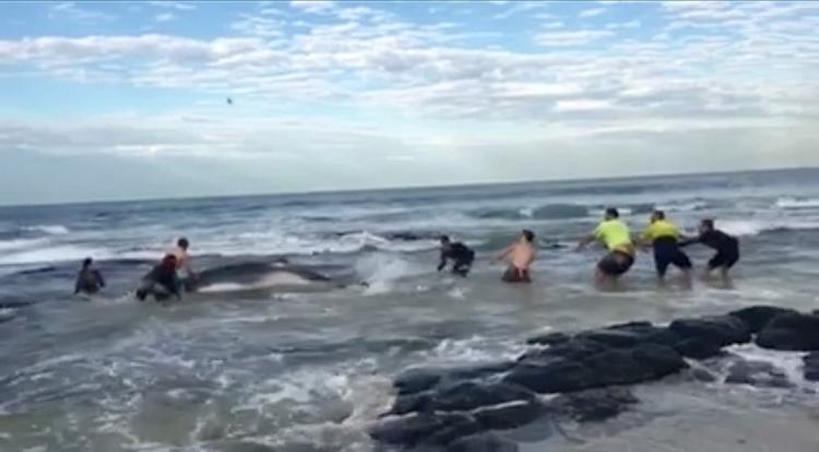 Surfers-salvaron-ballena-Australia 3