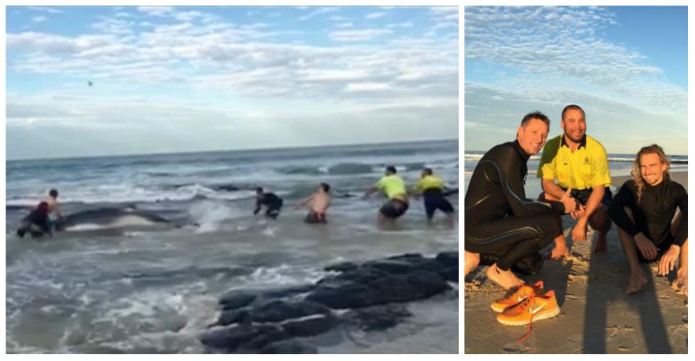 Surfers-salvaron-ballena-Australia-portada
