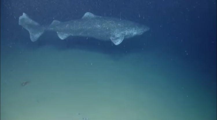 Tiburon-400-anos 2