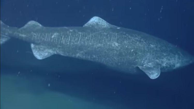Tiburon-400-anos 3