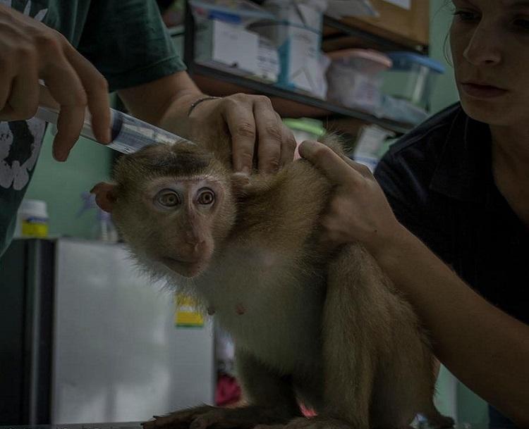 Triste sorpresa descubren mono dentro de bolso abandonado centro rescate 6