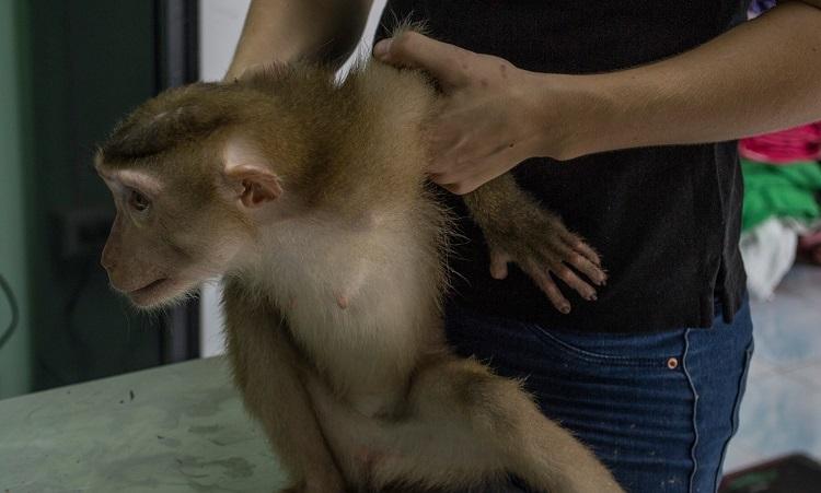 Triste sorpresa descubren mono dentro de bolso abandonado centro rescate 7