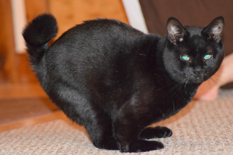 Walter-gato-con-deformidad 3