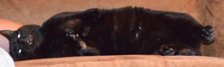 Walter-gato-con-deformidad 5
