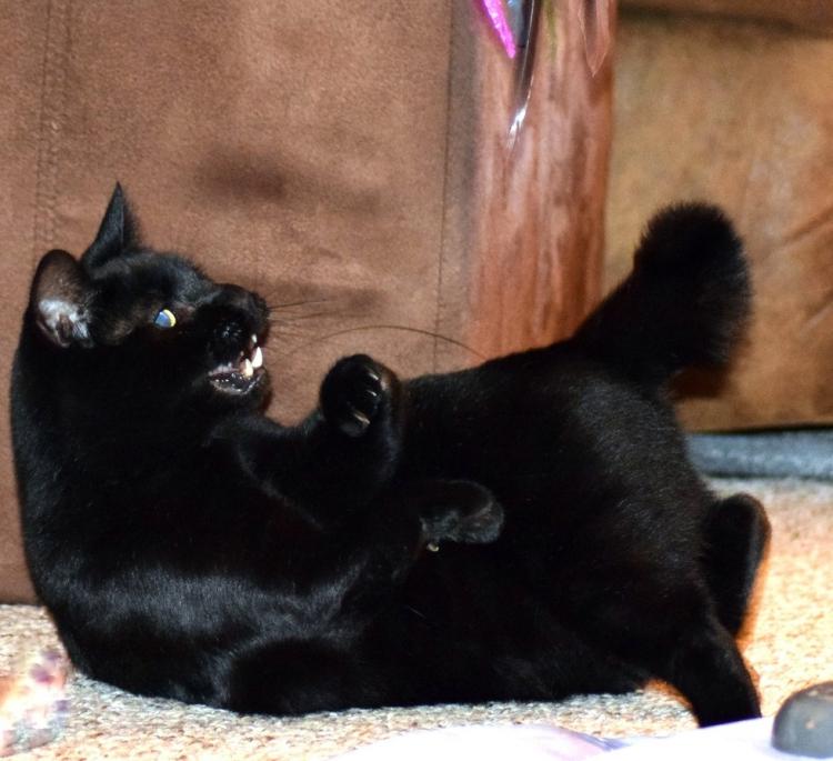 Walter-gato-con-deformidad 7