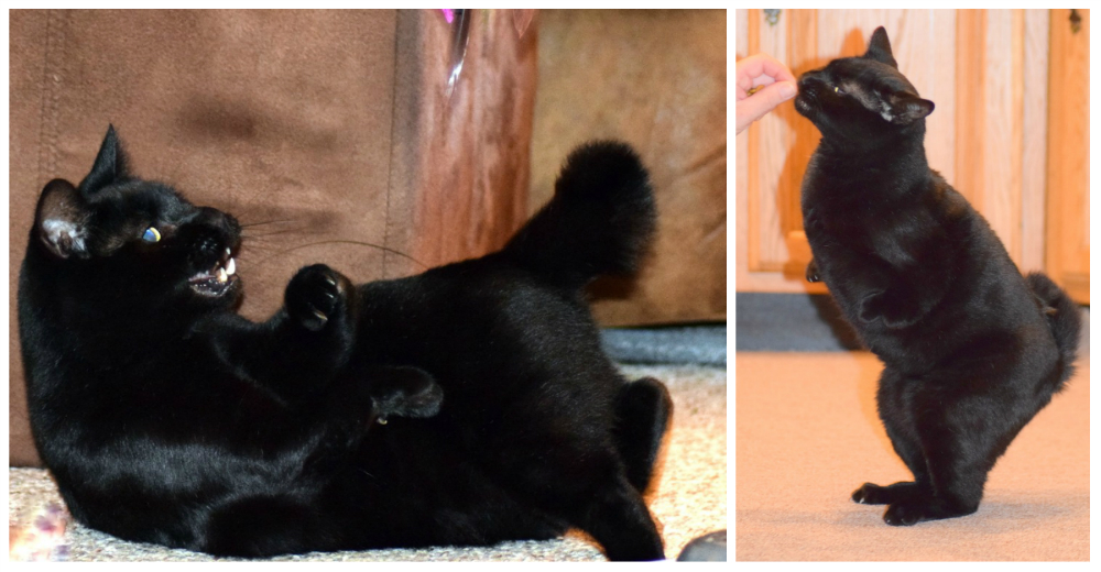 Walter-gato-con-deformidad-portada