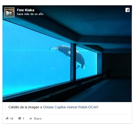 acuarios-crueles-como-seaworld1