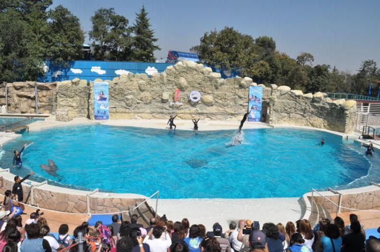 acuarios-crueles-como-seaworld10