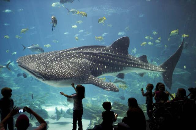 acuarios-crueles-como-seaworld11
