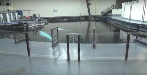 acuarios-crueles-como-seaworld4