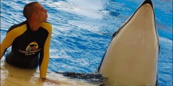 ballenas-seaworld-confesion-ex-trabajadora