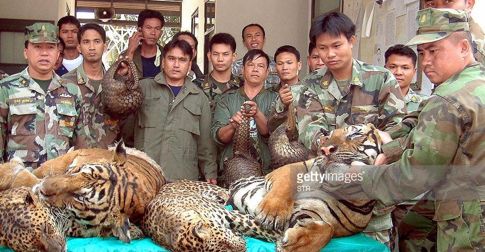 comercio-ilegal-tigres